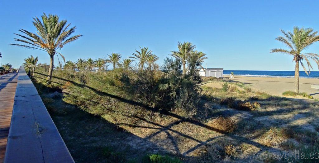 Zona de dunas de Gandia