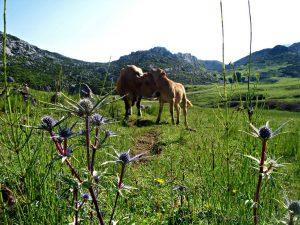 Las 3 mejores rutas de senderismo en Asturias