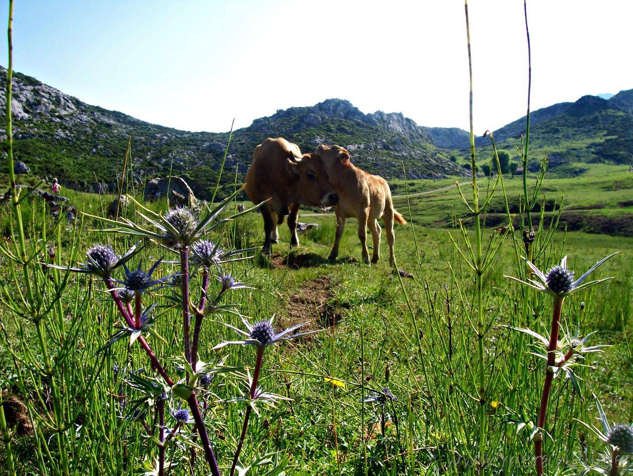 asturias meraviglia