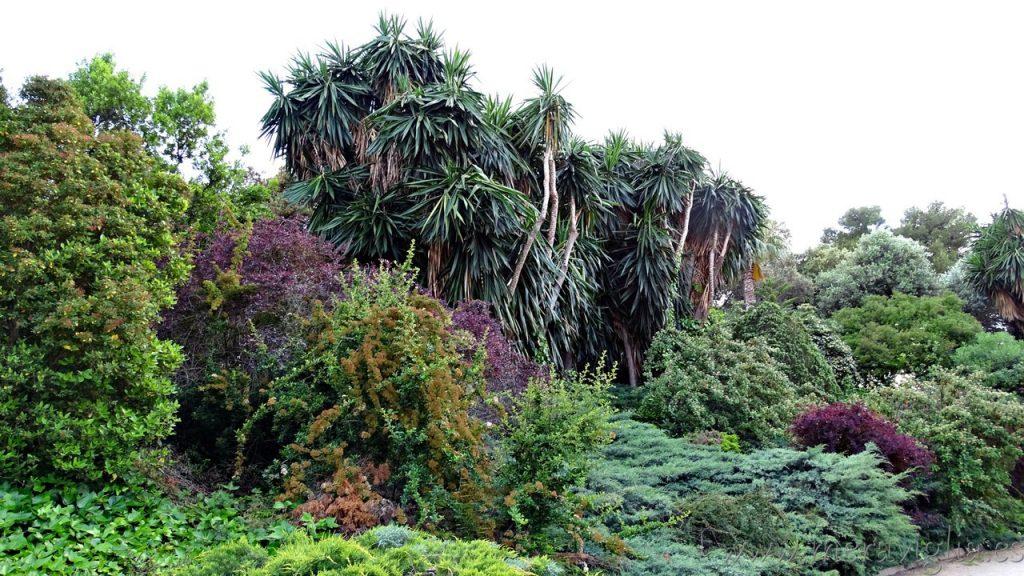 La vegetacion en el Parque de Benicalap