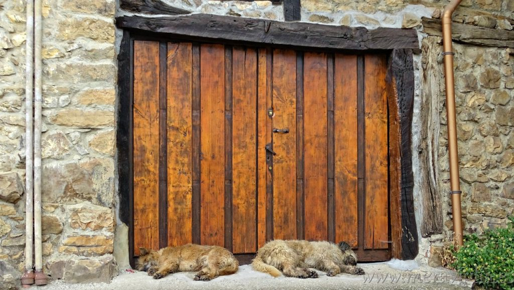 Perros en Mogrovejo