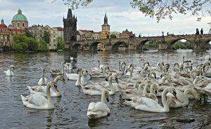 5+2 actividades originales que hacer en Praga