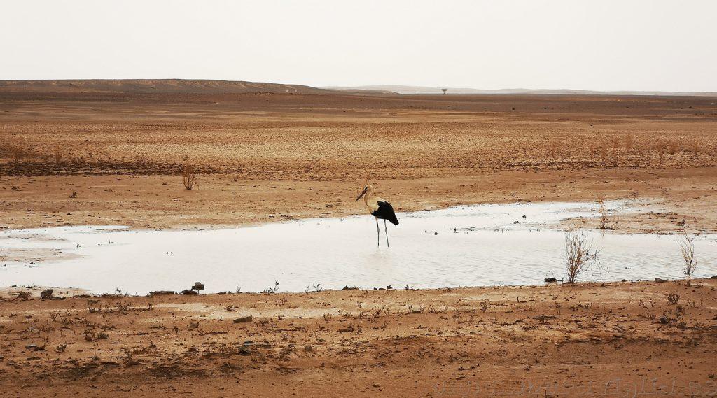Cigüeñas en Africa