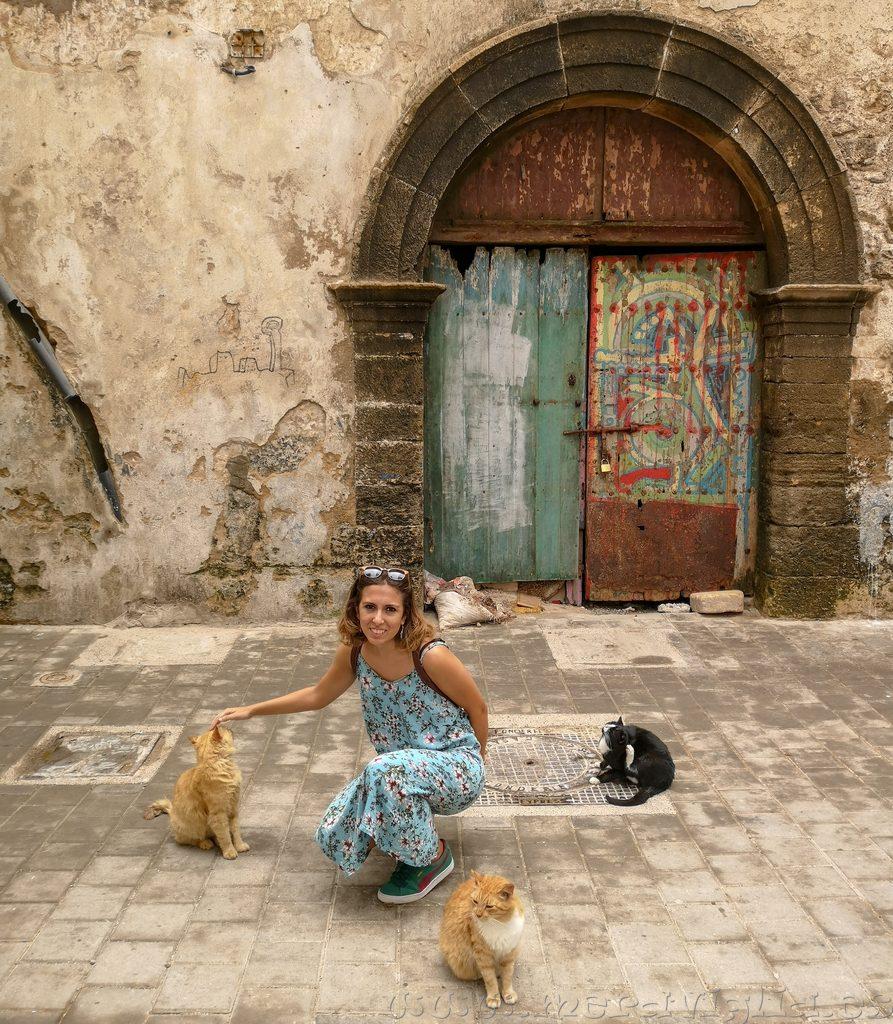 Gatos callejeros Marruecos