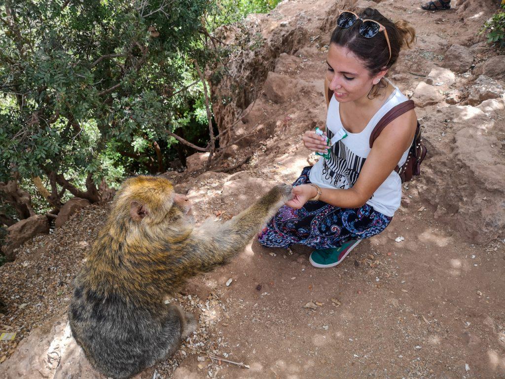 Monos Marruecos